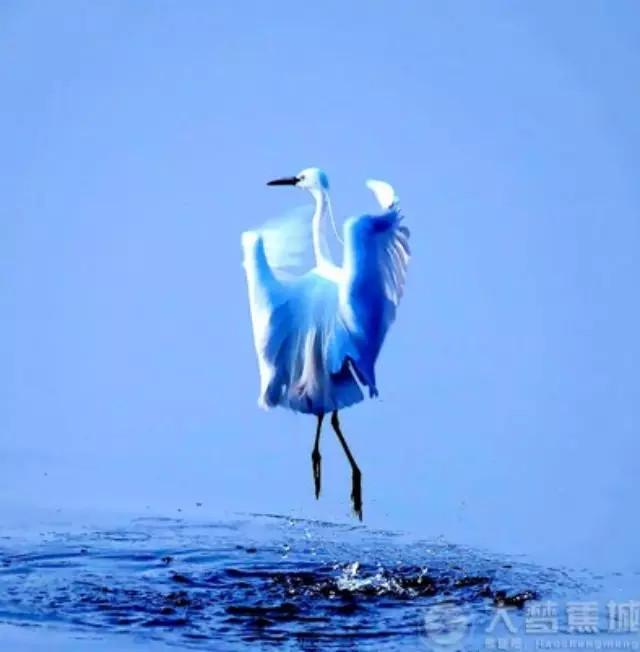 六月,我们约在蕉城看鸟儿跳水上芭蕾