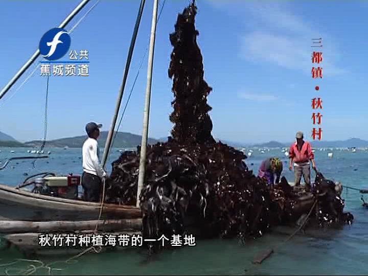 咱不任性,宁德3吨海带挂到2层高,画面太美不敢看