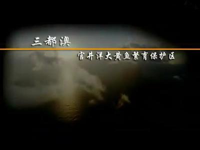 官井洋国家级大黄鱼,宁德人想吃就吃