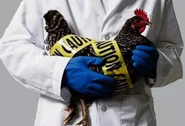 关于人感染H7N9流感你应知道的常识